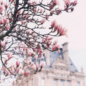car tour paris picture spot